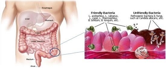 wellness_diabetic_diagram2
